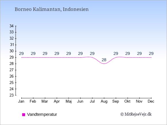 Vandtemperatur på  Borneo Kalimantan. Badevandstemperatur: Januar:29. Februar:29. Marts:29. April:29. Maj:29. Juni:29. Juli:29. August:28. September:29. Oktober:29. November:29. December:29.